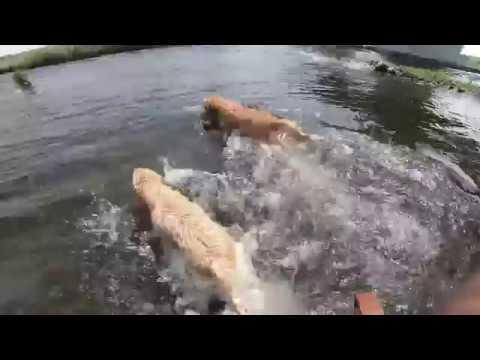 ハロキッカと一緒に多摩川で游ぎました