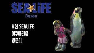 SEA LIFE Aquarium Visitor (부산 …