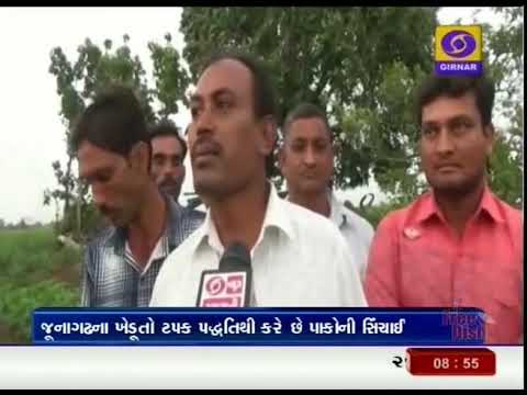 The farmers of Junagadh district adopt the New Technology of Drip irrigation | GroundReportGujarati