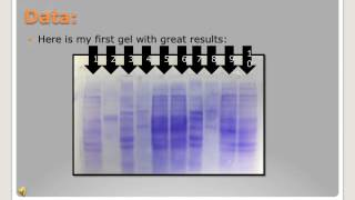 The Uses of Protein Electrophoresis