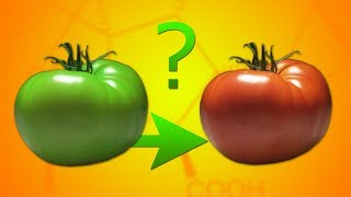 Как я Превратил зеленый помидор в Красный? Химия Растений!