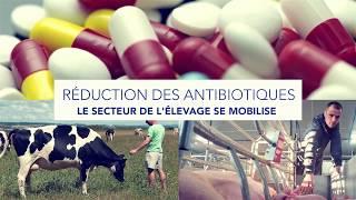 Maison de l'élevage présente Réduction des antibiotiques : le secteur de l'élevage se mobilise.