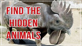 10 Find The Hidden Animal Puzzles