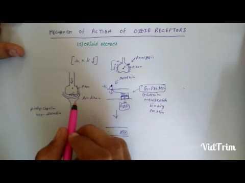 mechanism of action of opioid analgesic3 d pharma