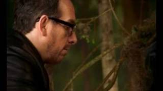 Elvis Costello - North.mp4