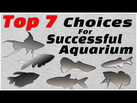 Top 7 Choices For Successful Freshwater Aquarium