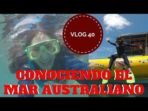 Nadando con peces enormes en Australia - Queensland - WITHSUNDAYS - Vlog 40