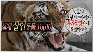 세계 최고의 실제식인동물 Top10! 호랑이 한 마리가 사람 436명을 죽였다구?