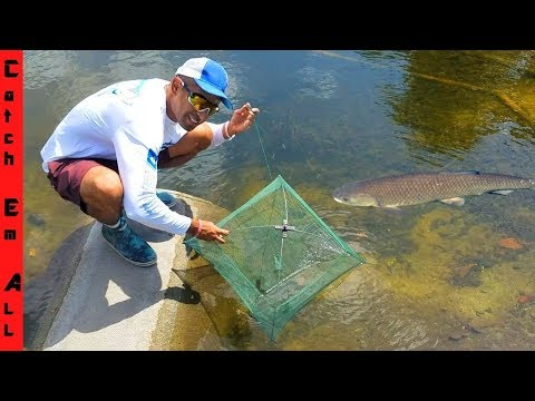 FOOD CHAIN FISHING TRAP CHALLENGE!