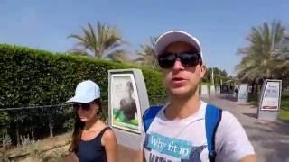 Пляж Абу-Даби|Поездка в мечеть Шейха Зайда(Друзья последнее видео про Абу-Даби и последнее видео про ОАЭ! Идем на пляж, а затем едем в большую белую..., 2016-06-06T14:51:49.000Z)