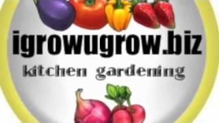 Igrowugrow No Spaghetti & No Meatballs