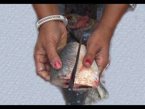 How To Cut Ilish/ Hilsa/ Ilisha Fish (ইলিশ মাছ)