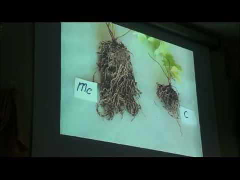 симбиоз мицелия гриба и корней