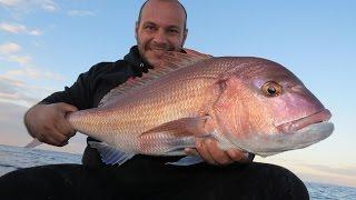 Inchiku fishing for Pink Dentex Dentex Gibbosus. (Live Strikes and Doublets) Τσαούσια με Inchiku