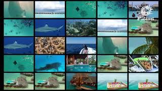 A Dozen Must Do Experiences in the Maldives