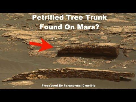Petrified Tree Trunk Found On Mars?