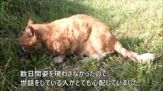 多摩川にいるネコたちの食事風景です。 ピーターがここ数日姿を見せなか...