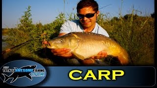 How To Catch Carp Using Surface Baits - The Totally Awesome Fishing Show