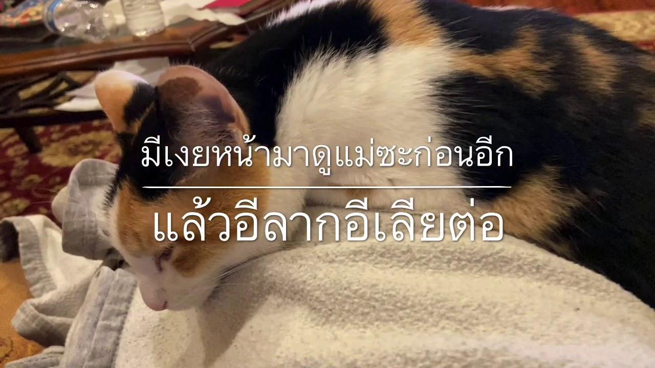 ผู้หญิงอะไร นอนกรน Ep#26 แอนนี่อดีตแมวจรสามสี