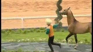 Turkmenian Akhalteke horses 2 mpeg