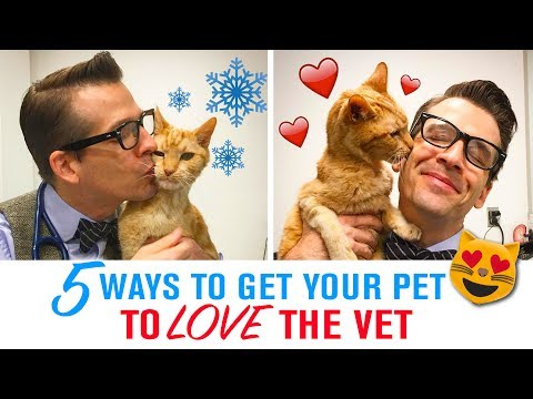 5 Tips to Get Your Pet to Love the Vet - Fear Free Veterinary Visits