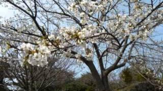 植村花菜 アルバム『春の空』より。花菜さんの、豊富なメロディーライン...