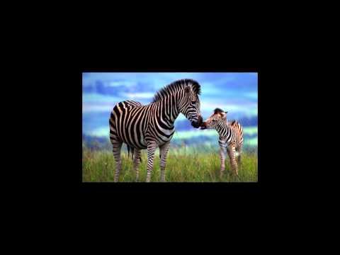 Երգի Թատրոն - Կենդանաբանական Այգում (At the Zoo)
