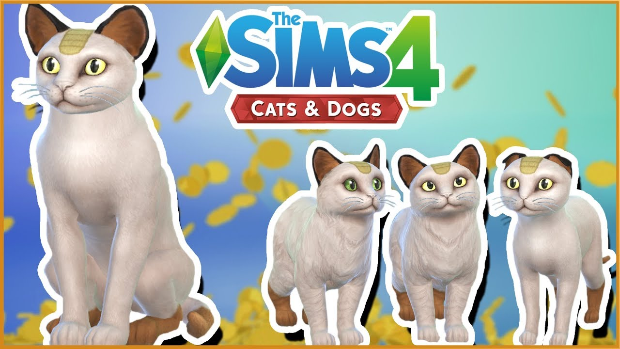 how to buy a cat sims 4