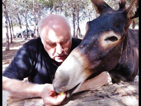 Cyprus wild donkeys stop the cars and demand food - Karpasia - Cyprus - by George Konstantinou