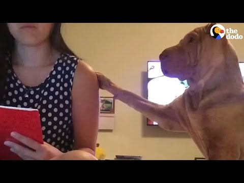 Dog Begs His Mom For Attention