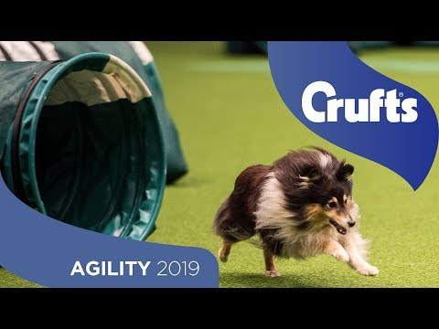 Agility - Crufts Team Small Final - Part 1 | Crufts 2019