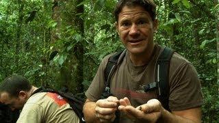 Chimpanzees hurl dung at Steve Backshall! | Deadly 60 | Series 2 | BBC