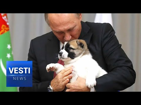 Putin Gets an  Asian Shepherd Puppy from Turkmenistan President at CIS Summit