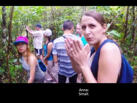 Philippines: Tarsiers of Bohol