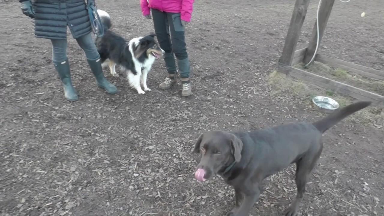 Körpersprache Hunde