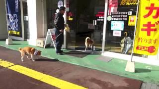 熊本県には犬専用の自動ドアボタンがある。犬もちゃんと利用している。