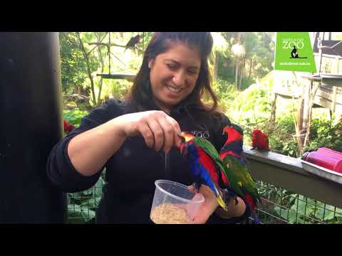 People Of The Zoo:  Meet Adelaide Zoo Bird Keeper Emma Macchia