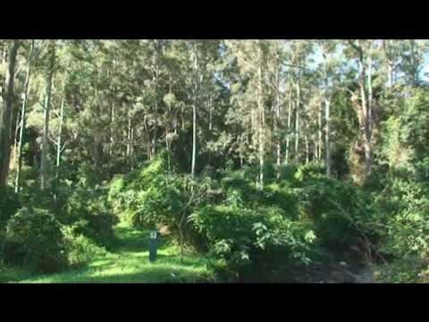 gold coast hinterland great walk numinbah valley youtube. Black Bedroom Furniture Sets. Home Design Ideas