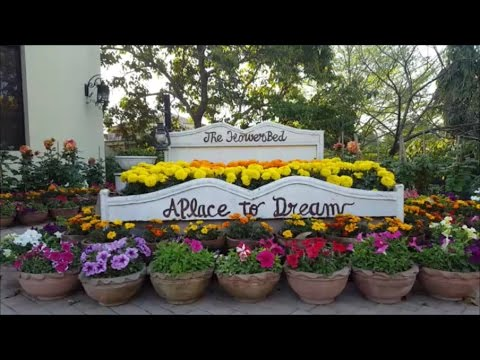 Most beautiful Garden - Natural Flowers garden with amazing ideas - Pakistan