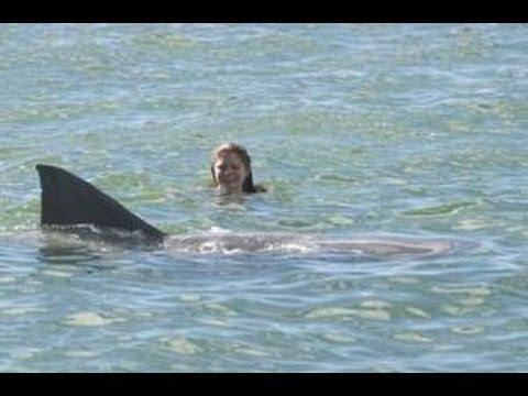 Shark Attacks German Tourist in Hawaii - Bites off Arm!