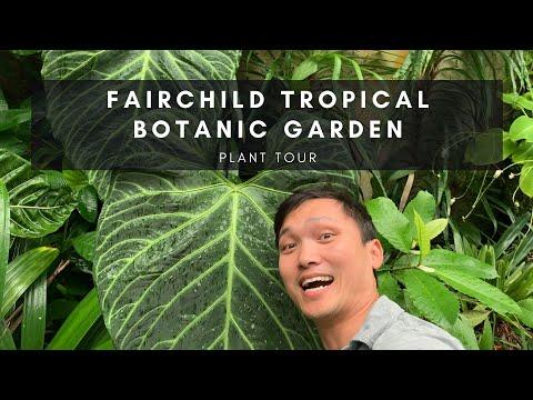 Plant Tour Of Fairchild Tropical Botanic Garden In Miami Florida | Ep 24