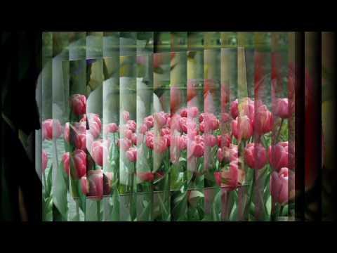 Blumen-die schönste Sprache der Welt