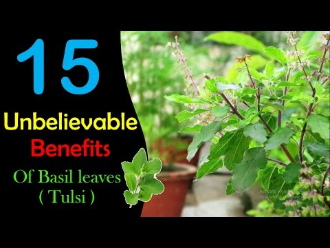 UNBELIEVABLE !! 15 Benefits Of Tulsi || You Should Know