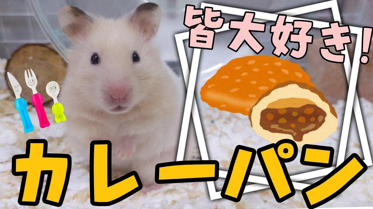 皆大好きカレーパンをコロ吉にもあげてみた…!?