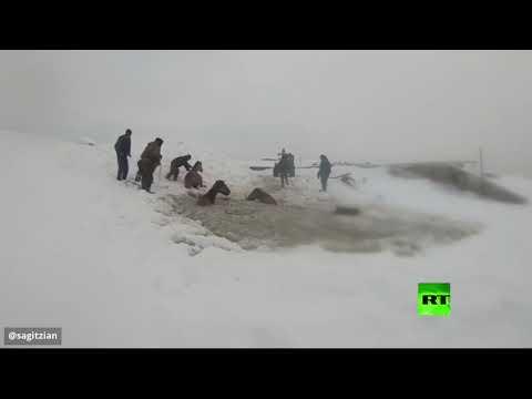 مواطنون روس ينقذون خيولا سقطت تحت المياه المتجمدة  - 23:59-2020 / 2 / 17