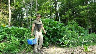 Vegetable Garden in the Forest, July Harvest