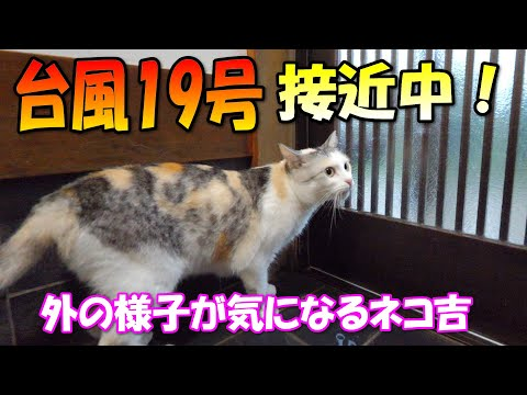 Calico cat Neko-Kichi can't stop thinking about the typhoon No.19 from YouTube · Duration:  4 minutes 40 seconds