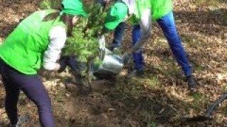 видео Продолжается акция «Живи, лес!»