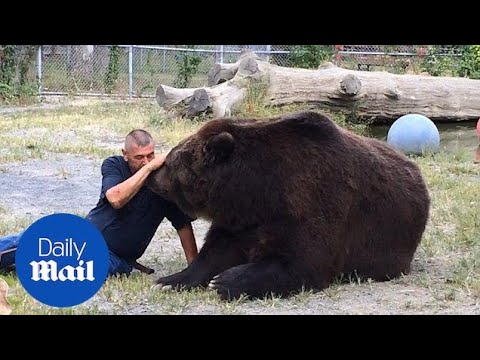 1400 pound bear strikes up great relationship with man - Daily Mail