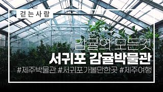 감귤박물관 둘러보기 ㅣ 걷는사람 ㅣ 2019제주한달살이…